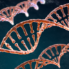 Spiral strands of DNA on the dark background