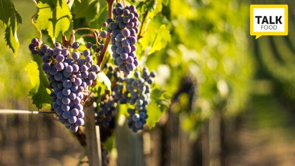 tavolo vitivinicolo