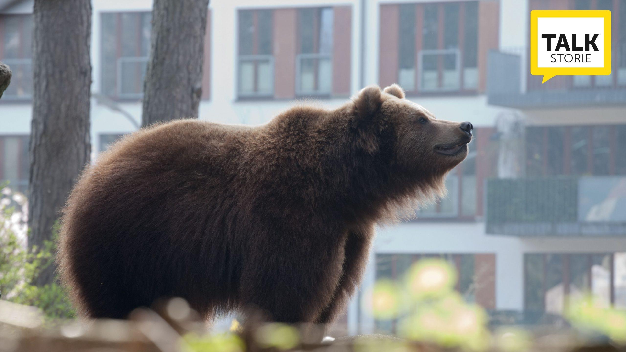 fauna selvatica in città